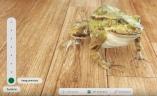froggipedia-ios-640px